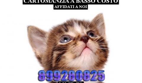 432552_kot_koshka_kotenok_polosatyj_belyj-fon_1920x1200_(www.GdeFon.ru)